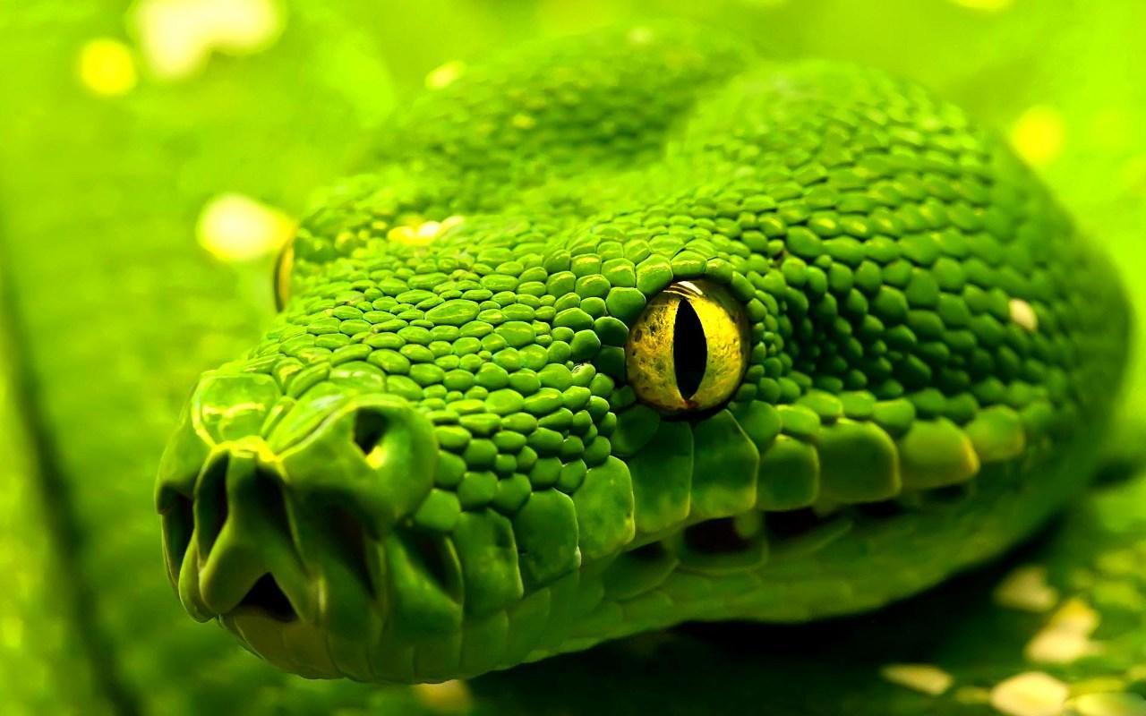 il diavolo è un astuto serpente